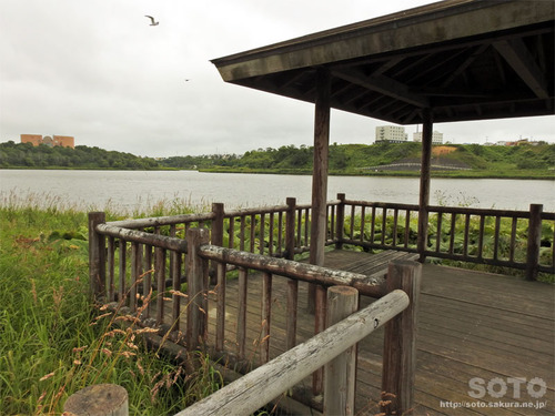 春採湖(07)