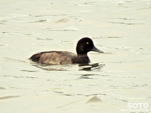 春採湖(08)