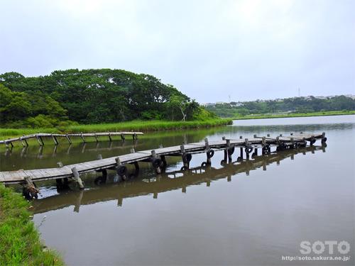 春採湖(23)