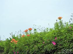 ワッカ原生花園(11)
