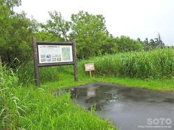 サロベツ湿原BYT(03)