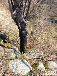 五竜かたくり苑(5)