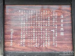 落倉自然園水芭蕉(03)
