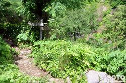 雨竜沼湿原(白竜の滝への分岐)