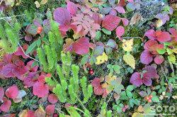 銀泉台の紅葉(3)