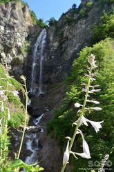 白山スーパー林道(ふくべの大滝とオオバギボウシ)