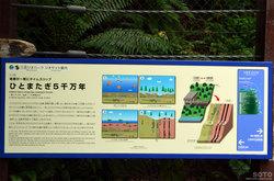 野外博物館エリア(ひとまたぎ5千万年)
