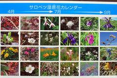 サロベツ原野(花カレンダー)