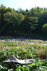 イワウベツ川(1)