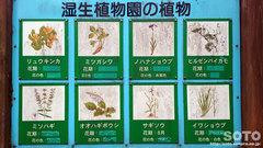 塩釜の冷泉(湿生植物)