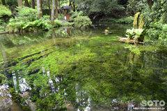 池山水源(水源)