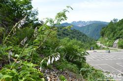 白山スーパー林道(駐車場を振り返る)