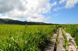 雨竜沼湿原(立ち枯れたエゾカンゾウ)