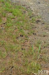 春国岱(鹿の足跡)