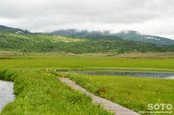 雨竜沼湿原(1)