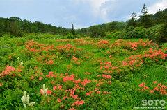 大場谷地湿原(1)