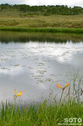 雨竜沼湿原(2)