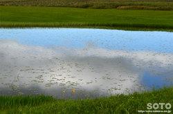 雨竜沼湿原(3)