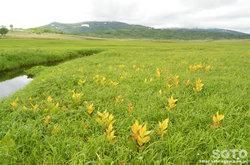 雨竜沼湿原(コバイケイソウ)