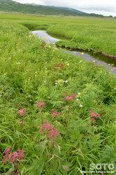 雨竜沼湿原(一方通行分岐点)