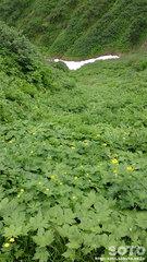 ニセイカウシュッペ登山(10)