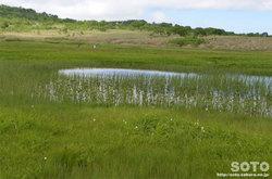 雨竜沼湿原(4)