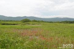 田代平湿原(9)