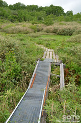 雨竜沼湿原(湿原展望台へ道)