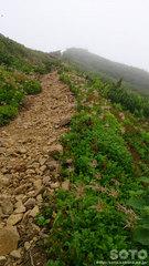 ニセイカウシュッペ登山(17)