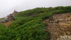 ニセイカウシュッペ登山(18)