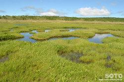 雨竜沼湿原(池沼群)