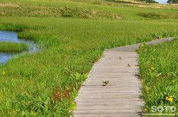 雨竜沼湿原(野鳥)