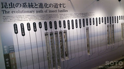 ひがし大雪自然館(13)