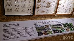 ひがし大雪自然館(16)
