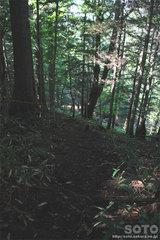 白藤の滝(4)