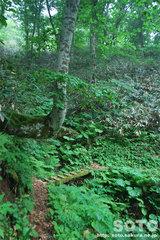 奥尻復興の森(6)