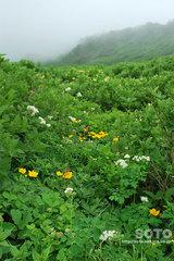 黒岳(5)