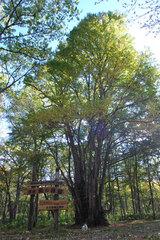 森の神様(4)