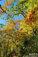 大沼自然探索路の紅葉