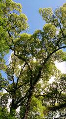 森林浴(1)