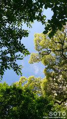 森林浴(2)