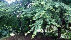 森林浴(5)
