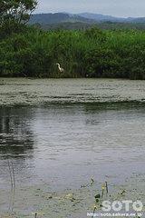 サロベツ(長沼と野鳥)