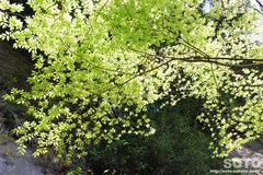 円通寺(新緑)