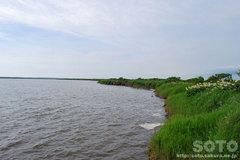 パンケ沼(3)