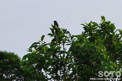 パンケ沼(野鳥)