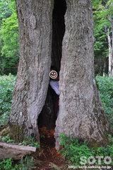 ポンホロ(巨木のウロ2)
