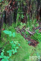 ポンホロ(倒木の上で)