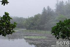 知床五湖(地上遊歩道13)