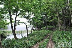知床五湖(地上遊歩道14)